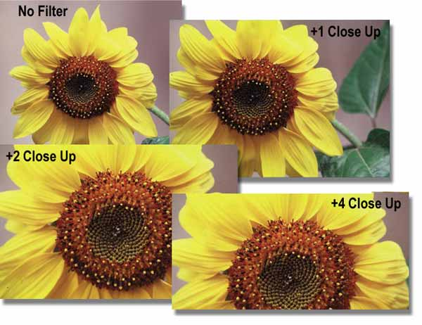 closeup-images
